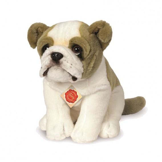 Chien Bulldog Anglais - Teddy Hermann